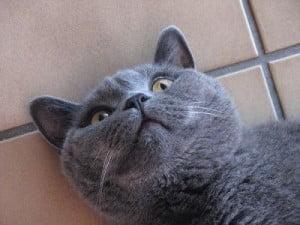 Cat on drugs  - catnip!