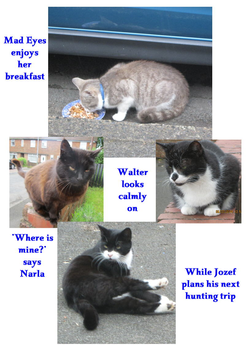 Walter and Jozef two cats living in England