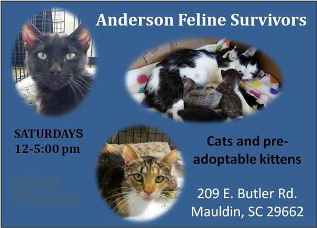 Anderson Feline Survivors