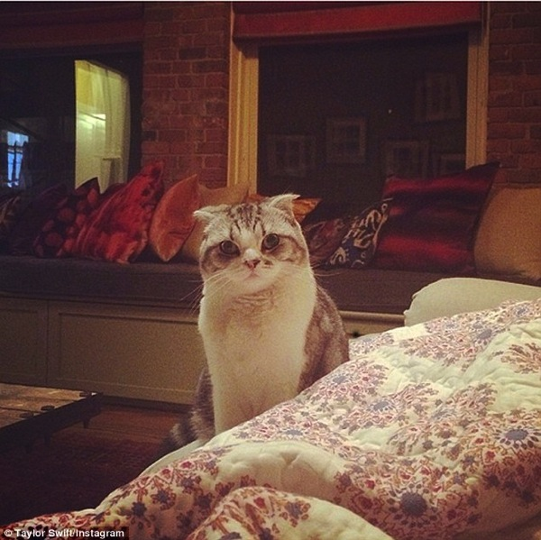 Meredith Grey one of Taylor Swift's cats