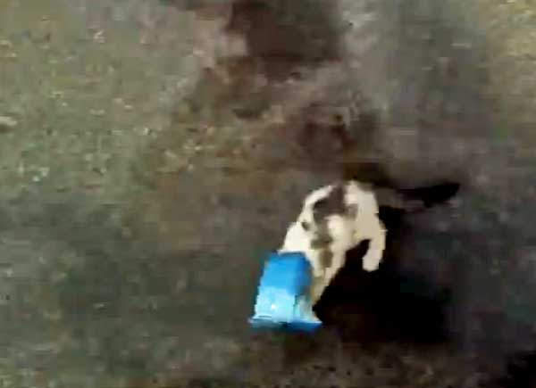 Saudi torture of cats