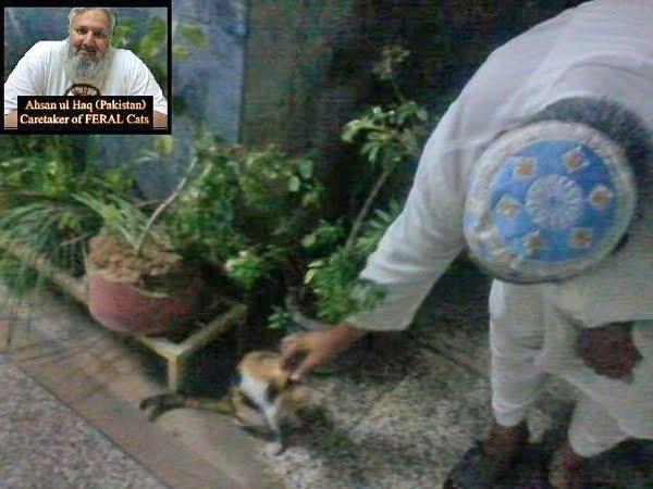 Calico cat Pakistan