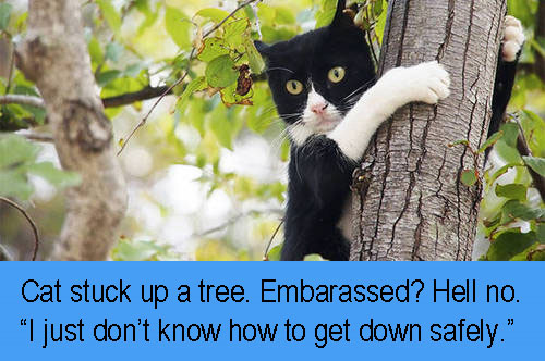 Can a cat be embarrassed? No, I don't believe so.