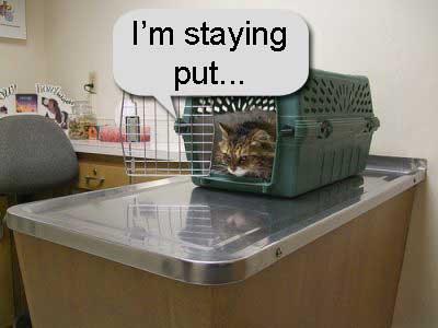 Cat at vet in carrier