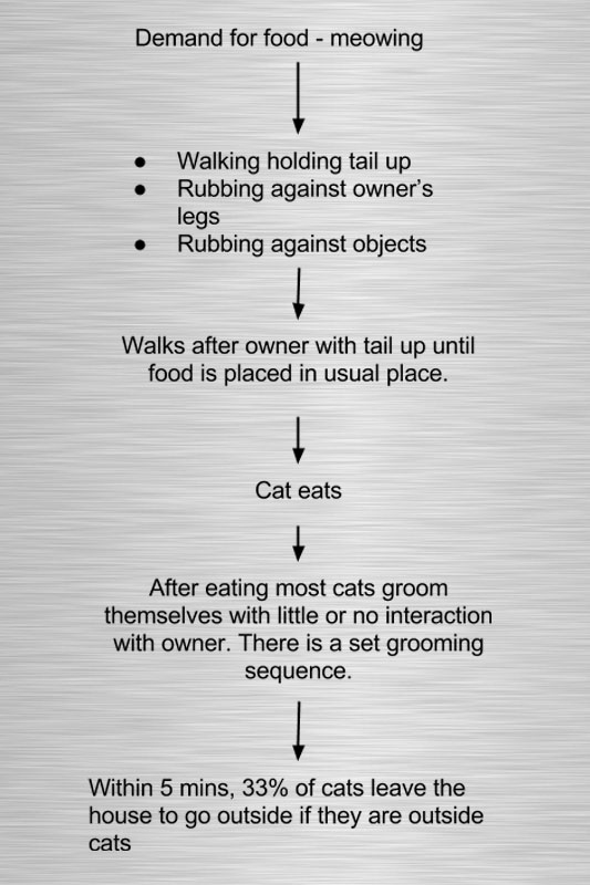 Cat feeding behavior chart. Before and after feeding.
