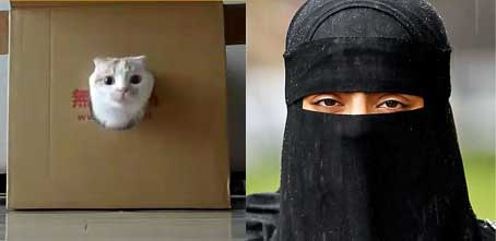 Cat in a box and a woman in a burqa
