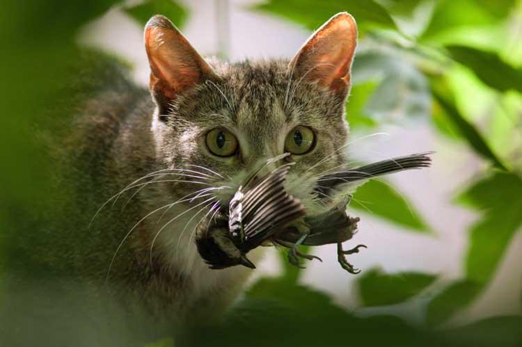 Cat murdering a bird