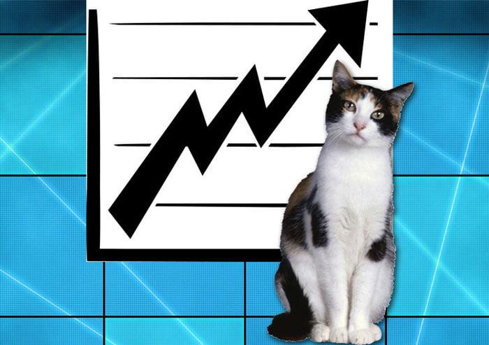 Cat video success