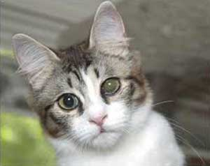 Cat Eye Infection Causes