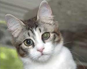 Cloudy Eye In Cats Symptoms