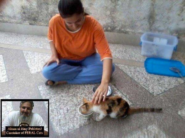 Domesticated feral cat Pakistan