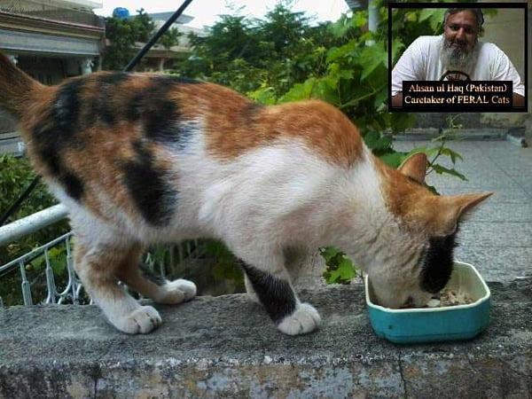 Feral cat in Pakistan