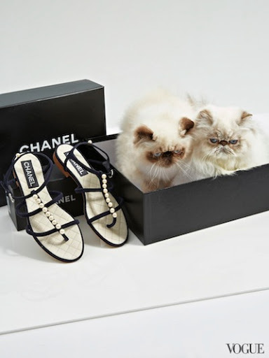 Himalayan and shoes