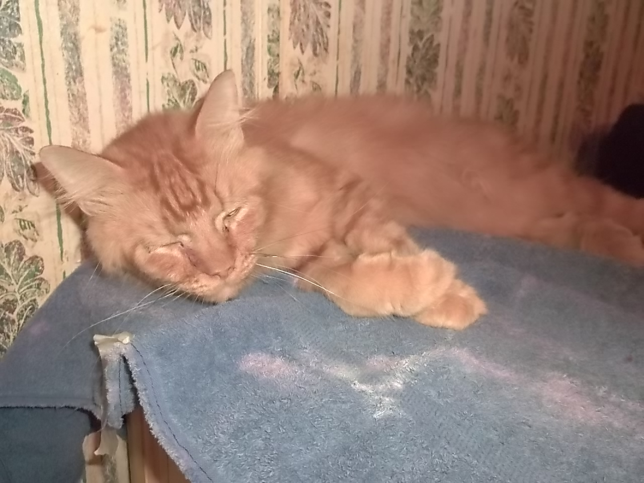 Cat hairball blockage home treatment gumiabroncs Images