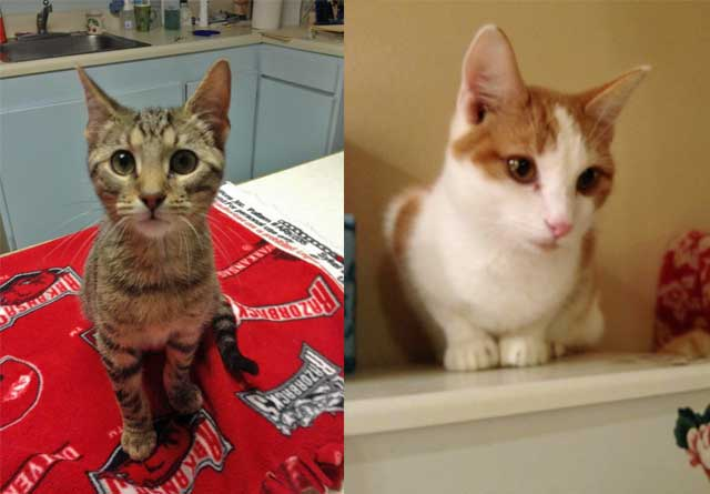 Rescue Cats Arkansas