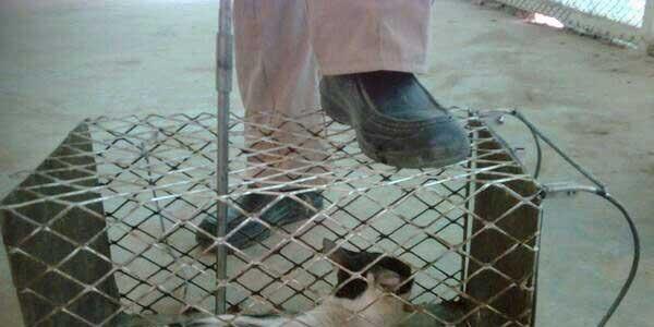 Saudi torture of street cats