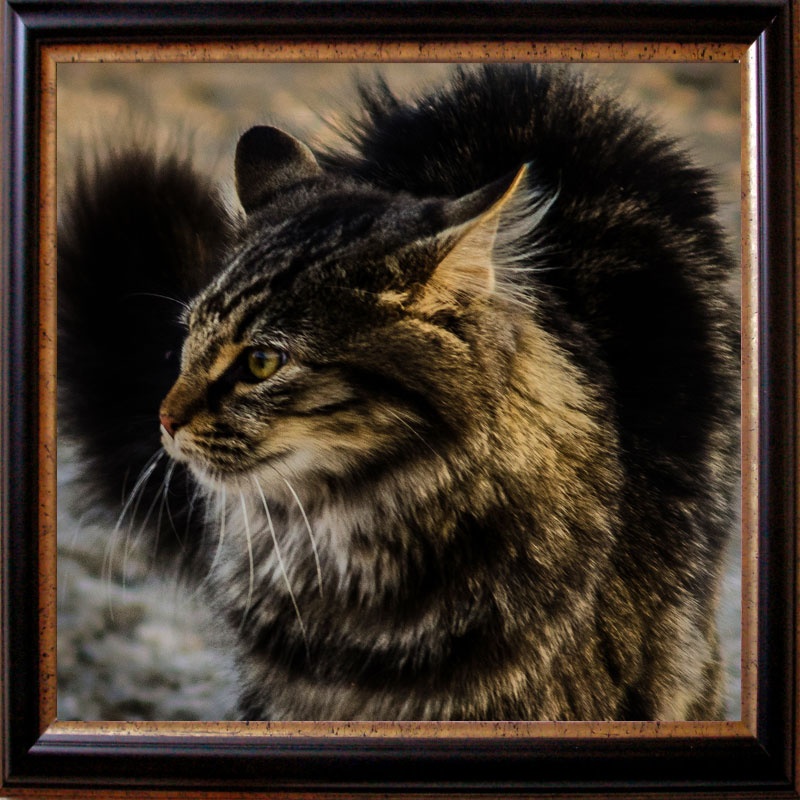 Picture of a special looking tabby cat