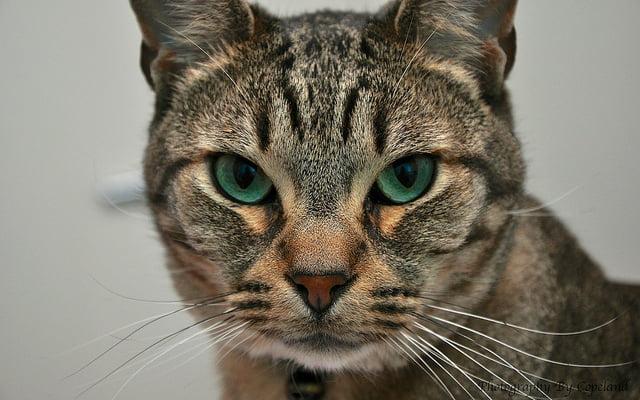 Cat eye showing dark eyeliner around the eye