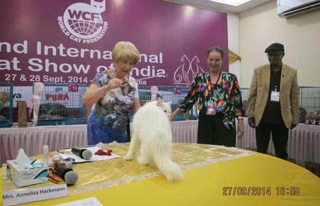 "Show ring judge Mrs Anneliza Hackmann (President of World cat Federation,Germany) examining a cat on the ""Show ring table"". Petra Muller (President of Middle East Cat Society) and Mr Shree.Nair (President of the Indian Cat Federation) observe."