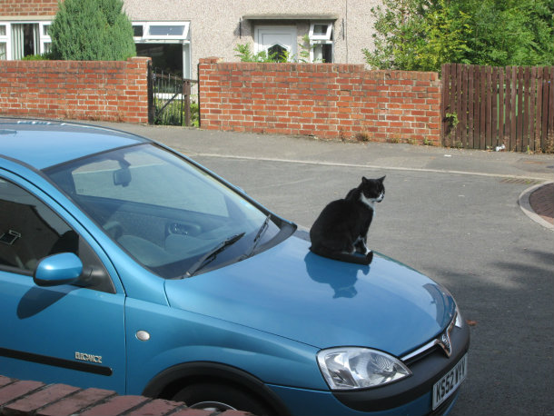 How To Keep Cats Off Car Roof
