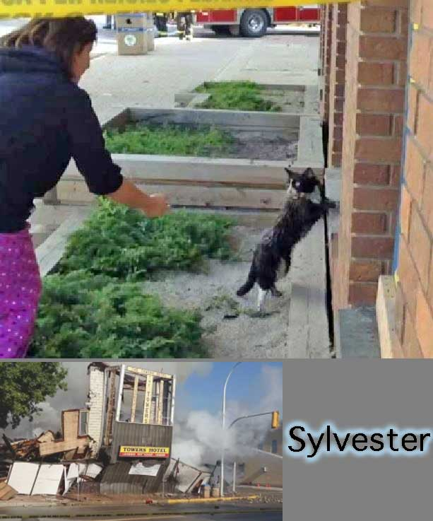 Sylvester a cat who survived a hotel fire