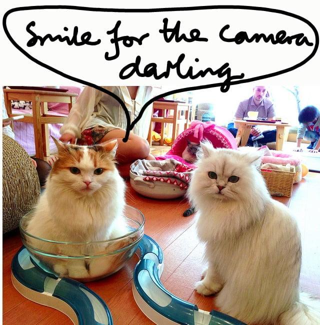 Cat cafes unsuitable for domestic cat?