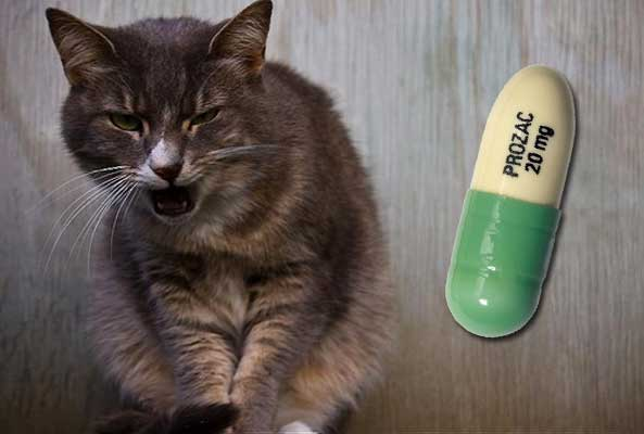 Cat prozac for aggression