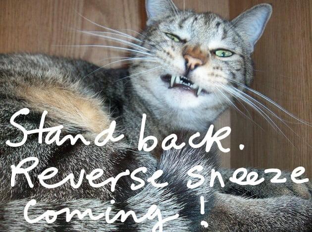 Cat reverse sneeze