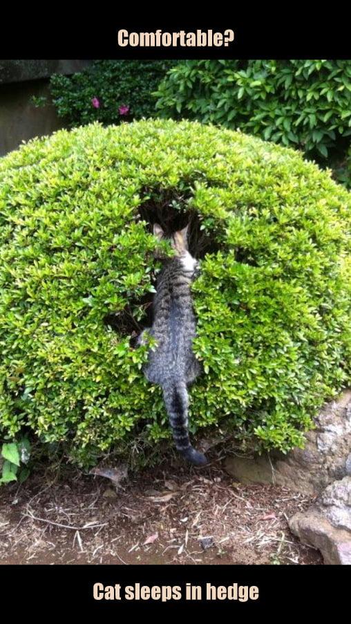 cat sleeps in a bush by So-yeon Kim