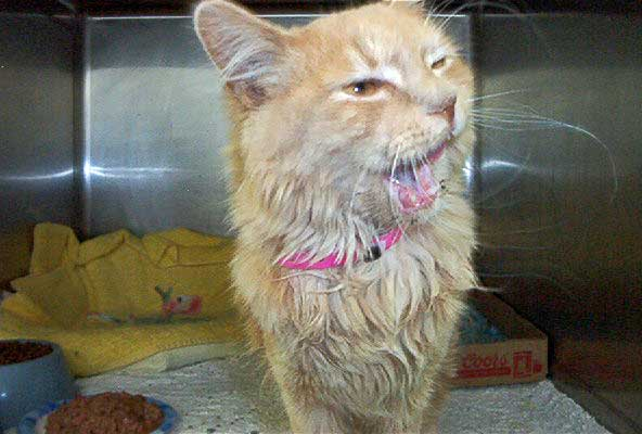 Shelter cat had severe uri