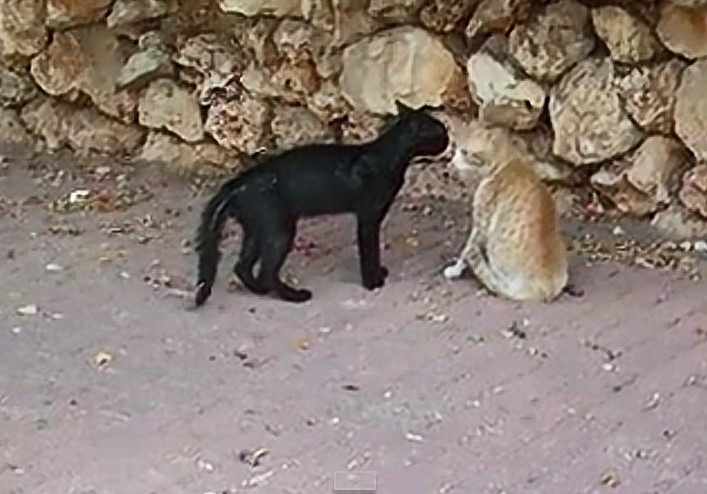 Street cat standoff before possible fight over territory