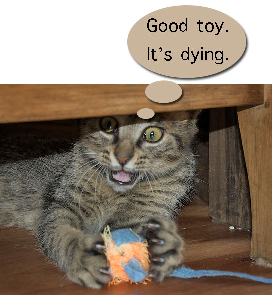 Why cats get bored with toys