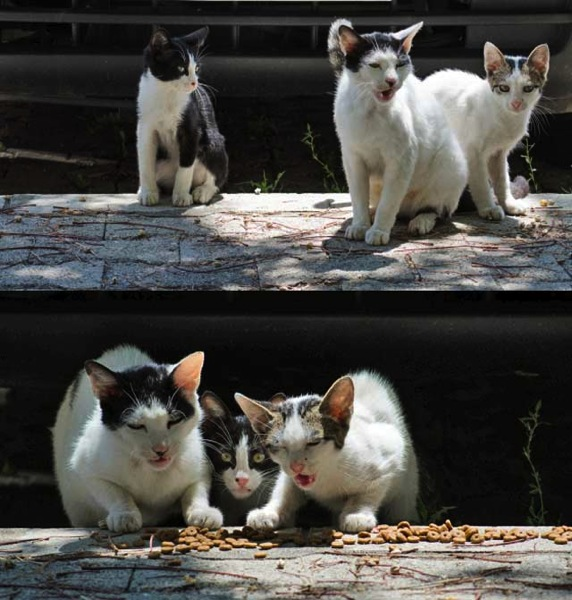 Cat family in Montenegro fed by Alexandra