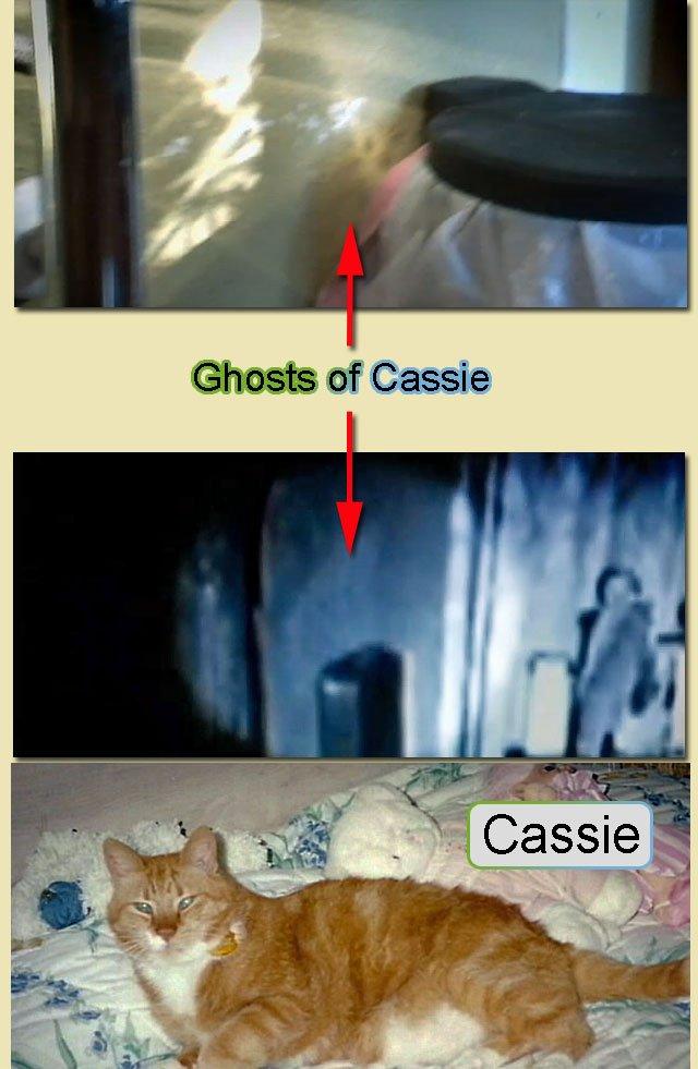 Cat ghosts