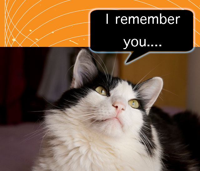 Cats have a good long-term memory