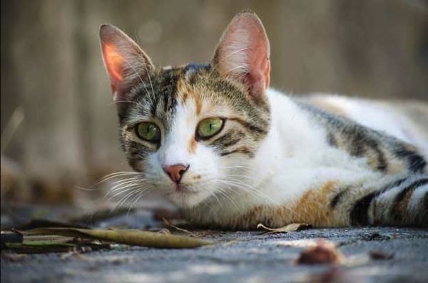 Osen a street cat in Montenegro