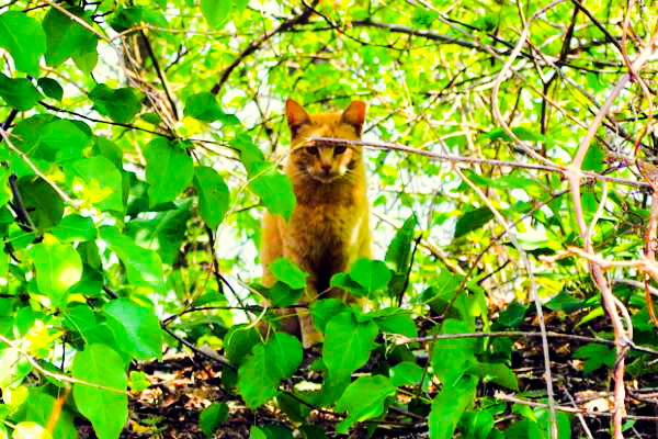 Feral cat Northern USA