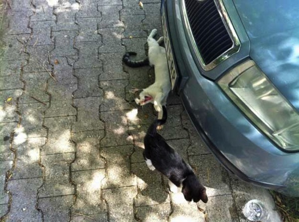 Street cats of Montenegro: Pro and Zak