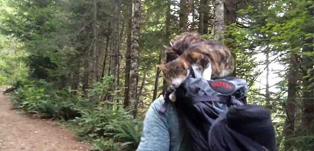 Blind cat on a trail in Seattle