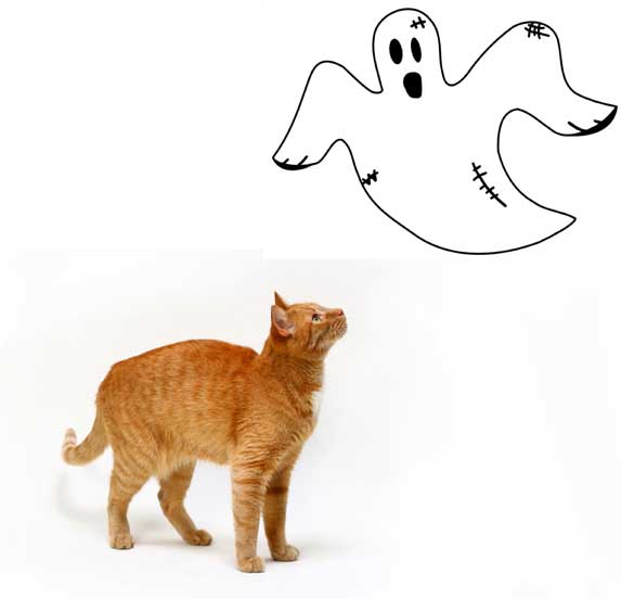 Can cats see ghosts?