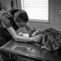 Cat at veterinary clinic