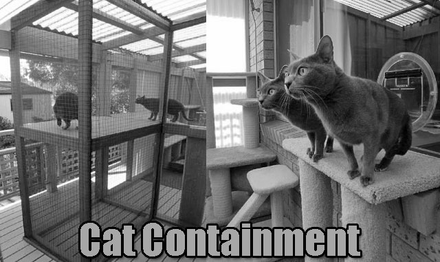 Cat containment Australia