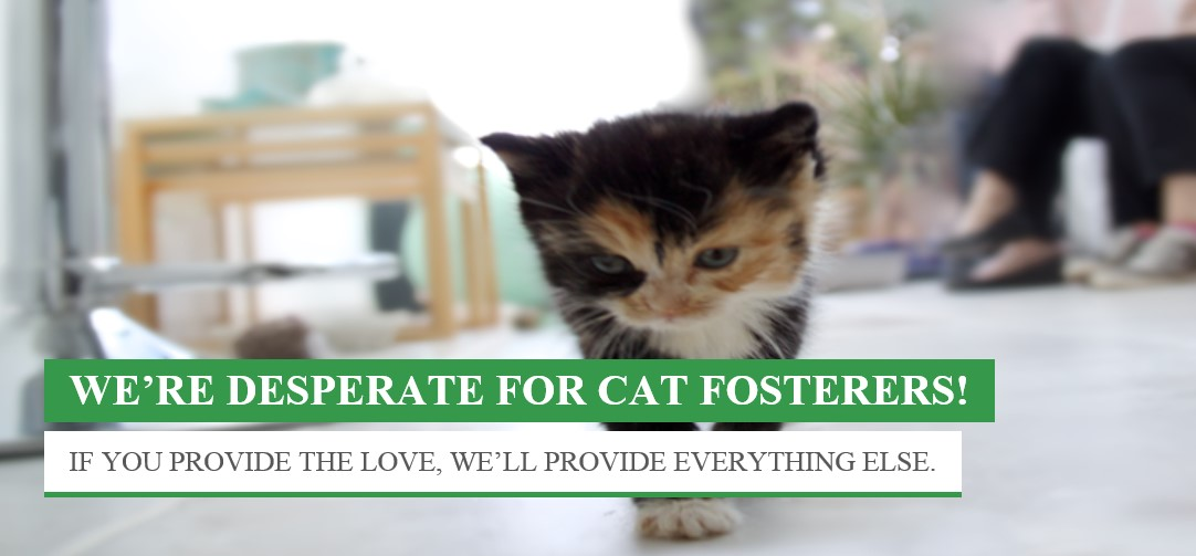 Desparate for Cat fosterers