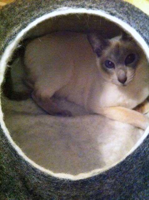 Cat house by kivikis