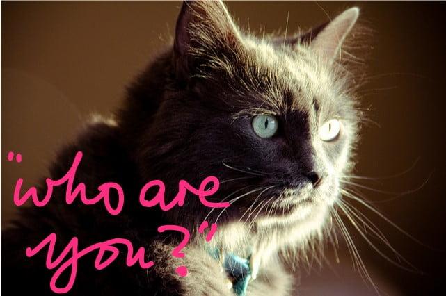 Cat non-recognition aggression