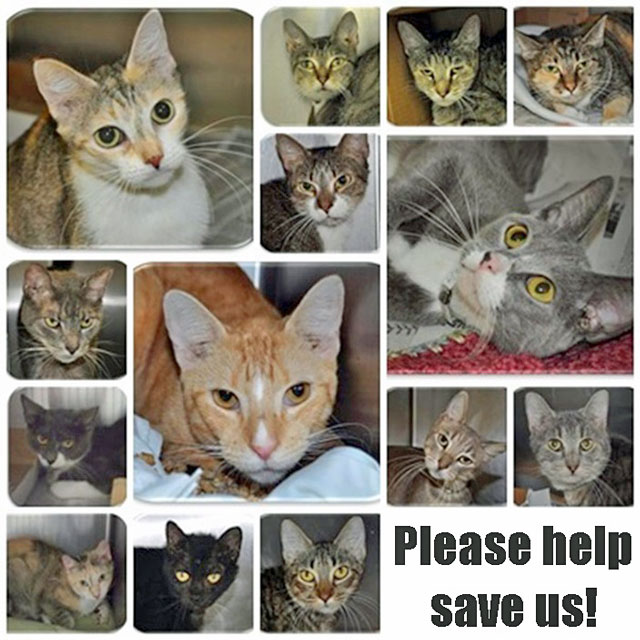 Oct 2nd 2014: Cats who survived cat hoarder need new homes