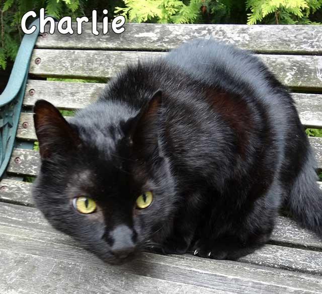Alert Charlie with silky black coat