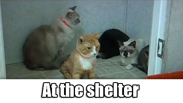 Cats at shelter rescued from hoarder's house