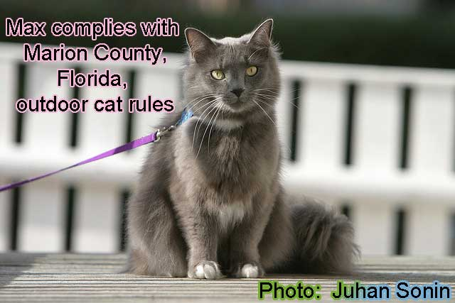 Rules on outdoor cats in Marion County, Florida, USA