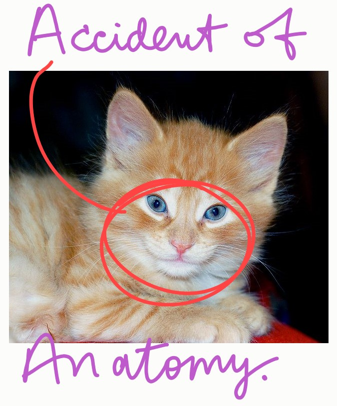 Smiling cat an accident of anatomy